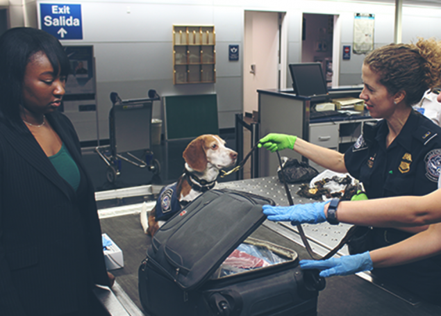 two customs officers and a sniffer dog inspect a woman's luggage