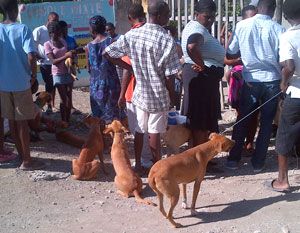 Community members bring dogs for vaccination during the vaccination campaign in Archaie.