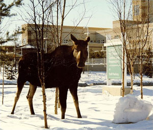 A moose standing in front of Center for Disease Control and Prevention/Arctic Investigations Program sign.
