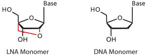 Illustration of LNA and DNA monomers