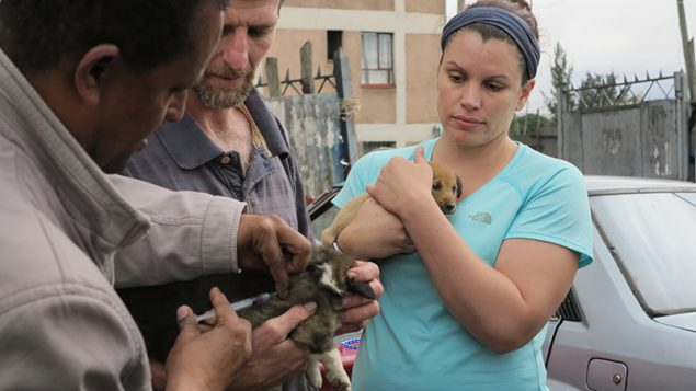 An Ethiopian veterinarian delivers a vaccination to a multi-colored puppy while Daniel Stewart helps hold it still. Nearby Dr. Emily Pieracci holds a small brown puppy whose big brown eyes peek around her hands.