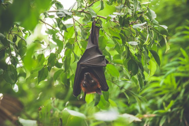 Bat hanging upside down in a green rainforest