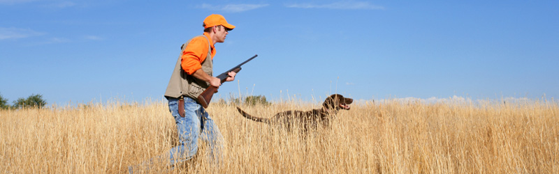 Image showing an orange vested hunter with a black dog walking through tall grass