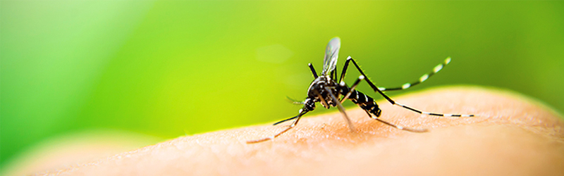 Image on a mosquito with blurry greenery in the background