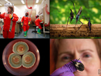 thumbnail image showing 4 of the beautiful scientific photos taken by Jim Gathany of work at CDC