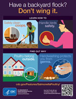 thumbnail of backyard poultry infographic