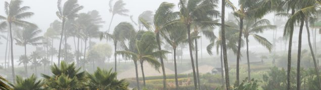 Palm trees swaying wildly in a bad storm