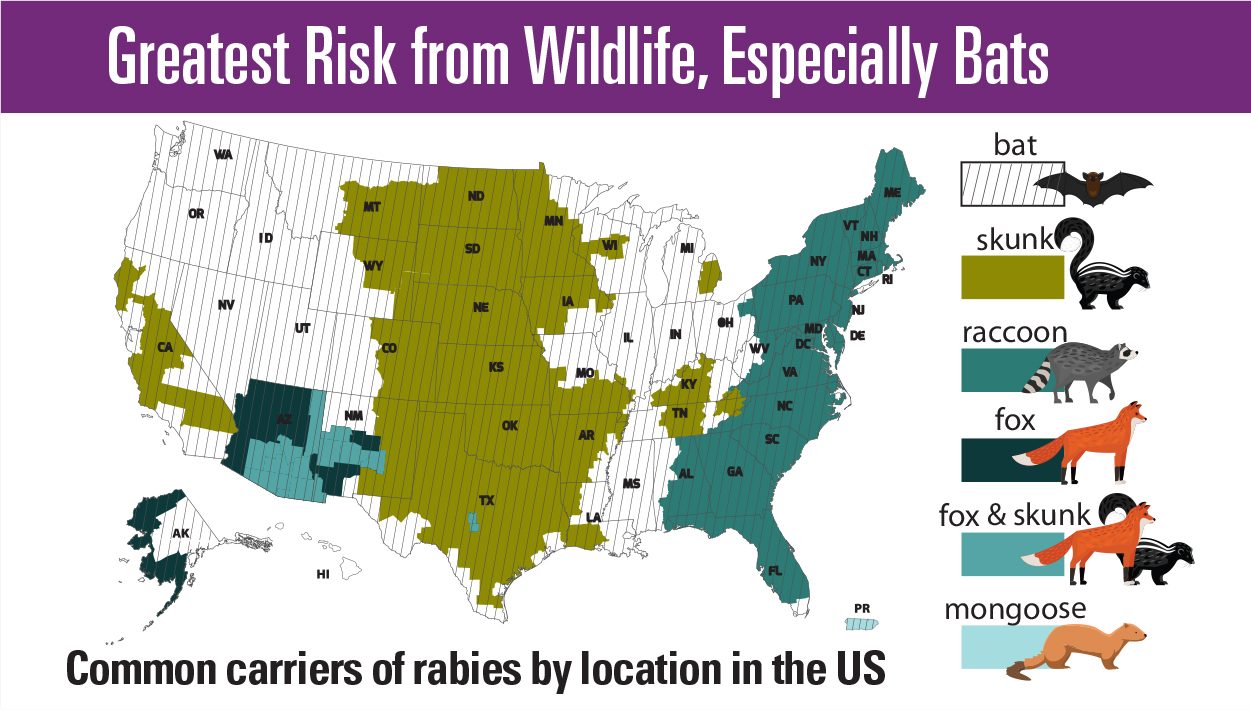 Maps showing the Greatest Risk from Wildlife, Especially Bats and common carriers of rabies by location in the US