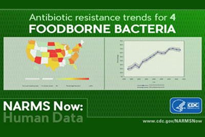 Image showing data and the words Antibiotic resistance trends for 4 Foodborne Bacteria