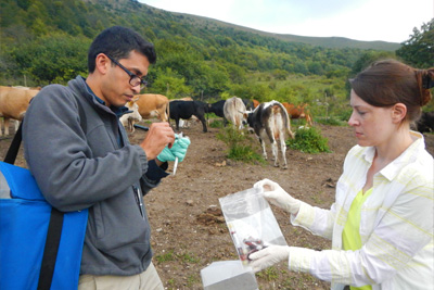 Image shows Neil Vora and Ginny Emerson collect blood samples from cattle in the country of Georgia for orthopox testing.