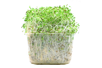 Clear square package of alfalfa sprouts against a white background