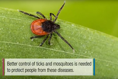 screenshot with words - better control of ticks and mosquitoes is needed to protect people from these diseases