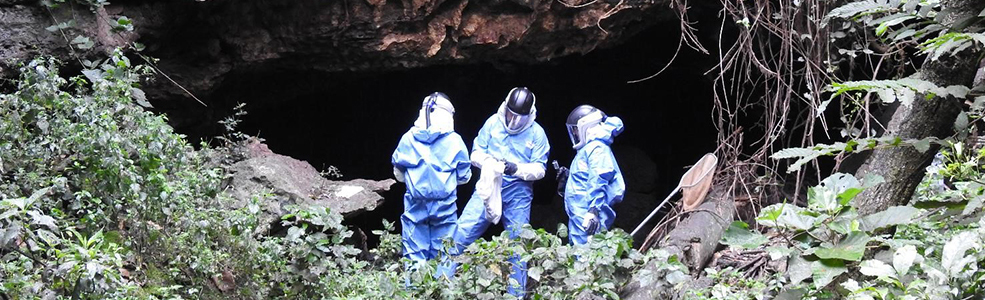 Scientists investigating bats in a cave