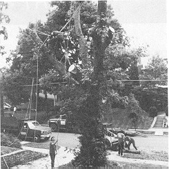 Figure 1. Tree trimmer at risk of falls and electrocution.