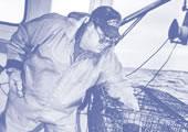 Image of Lobsterman working at sea