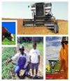 Agricultural image collage