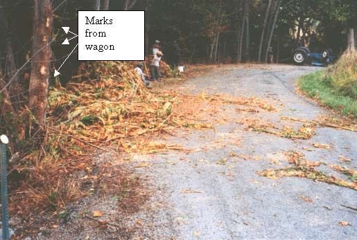 A picture of the tobacco which spilt from the wagon as it rode the tree line, flipped, then slid next to the tractor.
