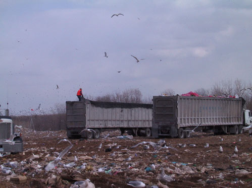 Photo 1.  MSW delivery trucks in the municipal landfill