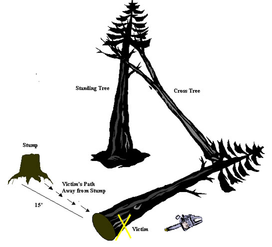 Figure 2. Forest Layout