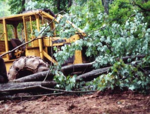 Figure 2. The  photo shows tree which struck the victim and the skidder which it bounced off of.