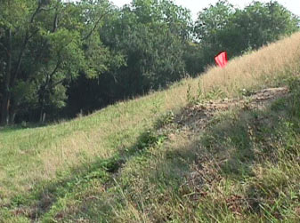 Figure 3. The orange flag marks the dirt mound which was created by a woodchuck.  The tractor's right front and right rear wheels ran over this mound causing the tractor to roll left down the slope.
