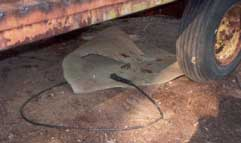 Figure 7. Flexible mat under feed bunker wagon