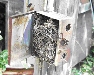 Picture #2: Pull box between house and corn bins with nesting materials.