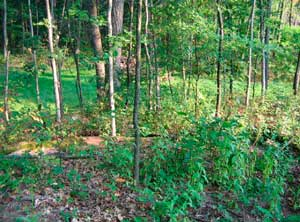 Figure 2. Wooded area behind home at time of MIFACE visit.