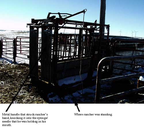 Photo 1. This is the Pearson brand chute that was being used to vaccinate the calves.