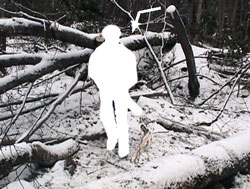 Figure 3. The photo shows the victim's position when struck-by the birch.