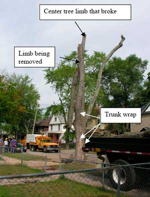 Figure 3. Overview of worksite: trunk wrap, suspended limb.