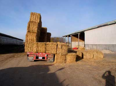 Trailer rear view, bales off trailer