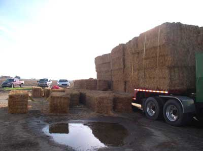 Double-strapped bales on gooseneck, bales that fell from trailer deck