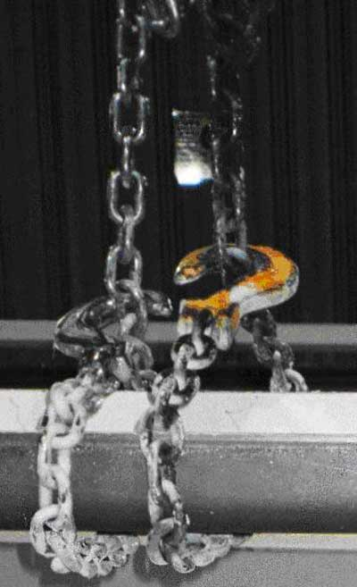 Exhibit 4. A picture of a chain sling in a chocker hitch position that was used to pick up the steel frame.