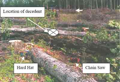 Decedent, hardhat and chainsaw location
