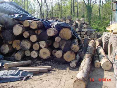 Stack of logs partially uncovered