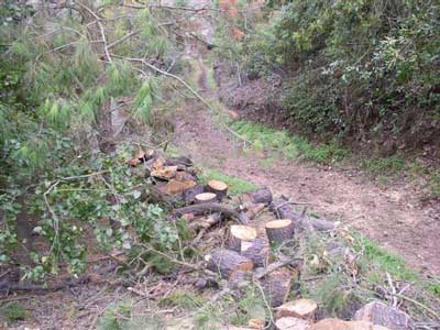 upper view of trail blocked by tree