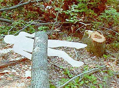 photo shows the final relationship between the stump, victim, and fatal energy source