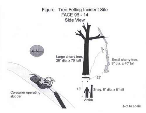 Figure. Tree Felling Incident Site.