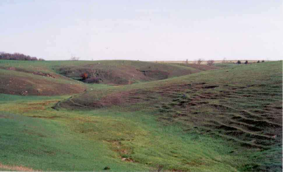Front page photo.  Photograph of the incident site, showing the field where the wildland fire occurred.