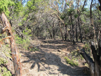 photograph of another section of the extraction line cut by fire fighters