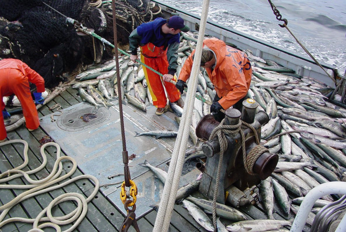 Commercial fishermen harvesting Chum Salmon in Alaska. Photo: NIOSH
