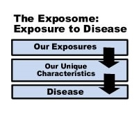 Exposome and Exposomics