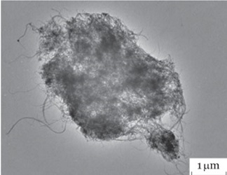 A cluster of airborne carbon nanotubes
