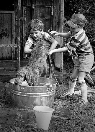 kids washing a dog