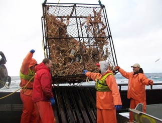 Crew members on a Bering Sea crab vessel land a pot of Opilio crab. Many nonfatal injuries occur when launching and retrieving the gear from a platform that is rolling with the seas and is often covered in water or ice. Photo courtesy of Mike Fourtner.
