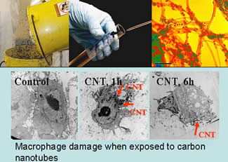 Microphage Damage when exposed to carbon nanotubes