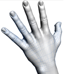 Digital hand modeling for protective gloves sizing applications