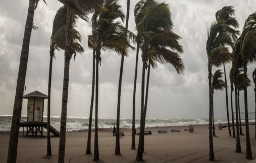 Wind blowing palm trees on a beach