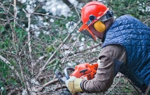 Person chainsawing fallen tree